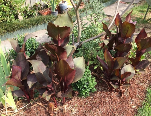 How to manage your garden during a drought